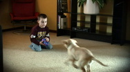 Boy and Dog 497 Stock Footage