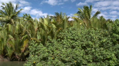 River bank with palm and coconut trees on it while the camera passes by Stock Footage