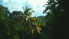 St John Virgin Islands  Palm Sky 3 Stock Footage