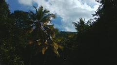 St John Virgin Islands Palm Sky Stock Footage