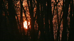 Sunset through windy trees. Stock Footage