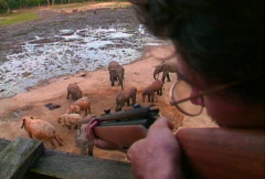 Shooting elephant dart gun 02 Stock Footage