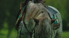 Horse 3 Stock Footage
