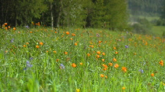 Meadow flowers Stock Footage