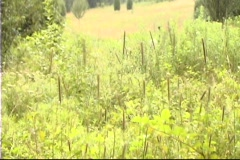 Cat Tails / Slow Shutter Effect Stock Footage
