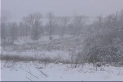 Snow falling in a field snow covered grasses Stock Footage