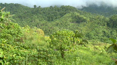 Overview oder rain Forest with low clouds Stock Footage