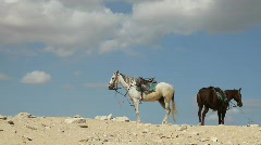 Couple of horses Against Blue Sky Stock Footage