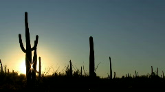 Cactus sunset timelapse Stock Footage