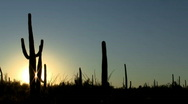 Stock Video Footage of Cactus sunset timelapse