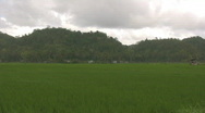 Stock Video Footage of Newly planted rice in Carmen on Bohol island in Philippines