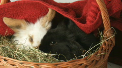 Cute baby Easter rabbits IV Stock Footage