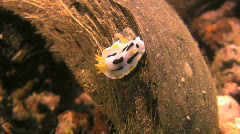 Nudibranch on the ocean floor in the Philippines Stock Footage