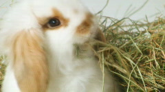Cute baby Easter rabbits VIII Stock Footage