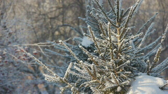 Stock Video Footage winter time frost Stock Footage