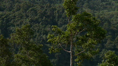 Dark green jungle canopy Stock Footage