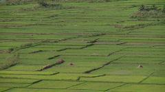 Symmetrical rice fields Stock Footage