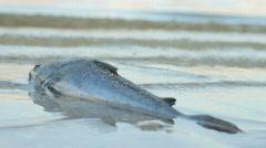 Lagoon Dead Fish - stock footage