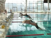 Stock Video Footage of Swimming