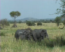 Elephants at a mud-pool Stock Footage