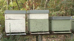 Honey Bees working in the hive Stock Footage