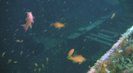 Stock Video Footage of Sea Goldie on Alma Jane boat wreck in Sabang - Philippines