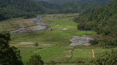 Overview over a valley with lush rice fields with a river flowing through and  Stock Footage