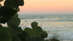 Peering through Sea Grapes Stock Footage
