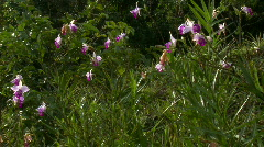 Lush green grass, other plants and orchids Stock Footage