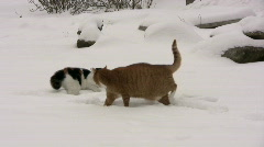 Cat fight in the snow Stock Footage