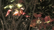 Stock Video Footage of Leaves