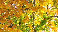 HD Beautiful autumn colours - stock footage