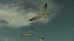 Stock Video Footage of Seagulls Flying Close-Up HD 1080 by in