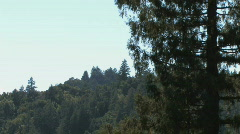 Mountain Treetops Stock Footage
