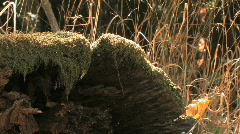 Mossy Log Stock Footage