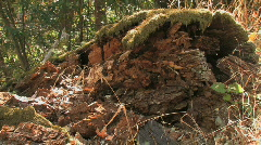 Rotting Log Stock Footage