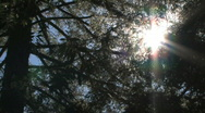 Stock Video Footage of Sunshine Through the Trees