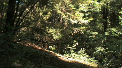 Forest Pan & Tilt Stock Footage