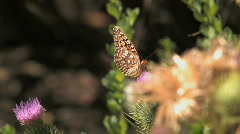 Butterfly Fly Away Stock Footage