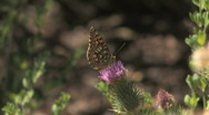 Stock Video Footage of Butterfly on Flower