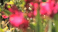Flowers Rack Focus Stock Footage