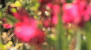 Stock Video Footage of Flowers Rack Focus