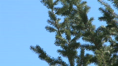 Blue Sky Treetop Stock Footage