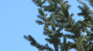 Stock Video Footage of Blue Sky Treetop
