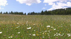 Countryside in Styria  Stock Footage