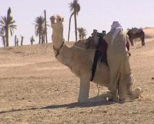 Muslim riding camel Stock Footage