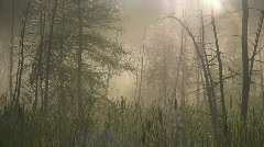 Morning mist in swampy forest. Two shots. Stock Footage