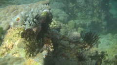 Camouflage groupe, Epinephelus polyphekadion on a reef in the Philippines Stock Footage