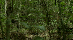 Pan with a Group of people walking trough the jungle  Stock Footage