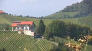 Stock Video Footage of Vineyards